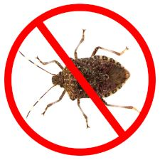 Stink Bugs will be returning this Fall!