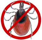Tick Control by Mosquito Clear